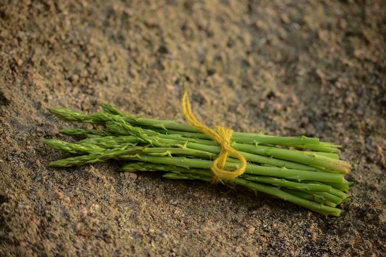 asparagi (4)
