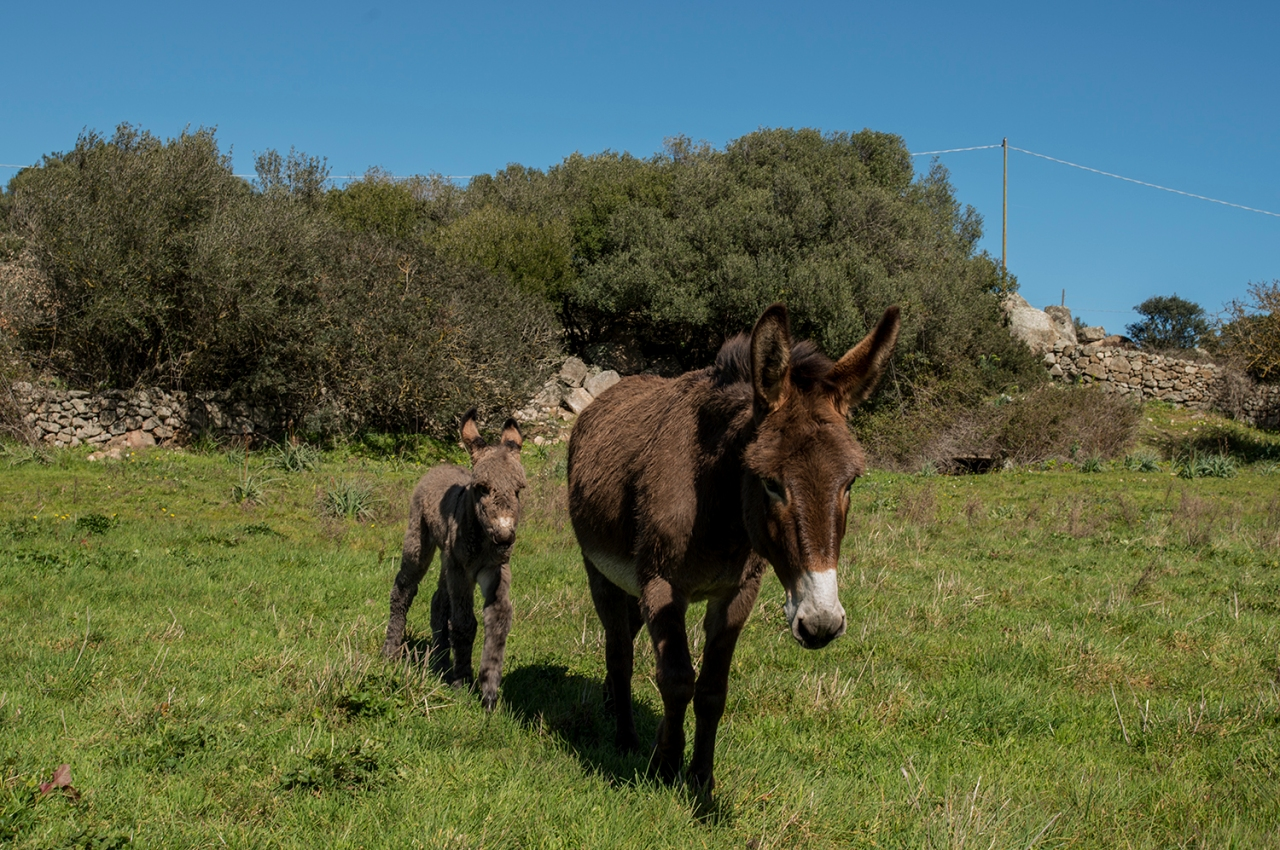 donkeys mother foal