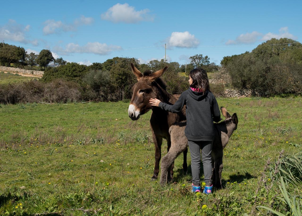Marta and donkeys