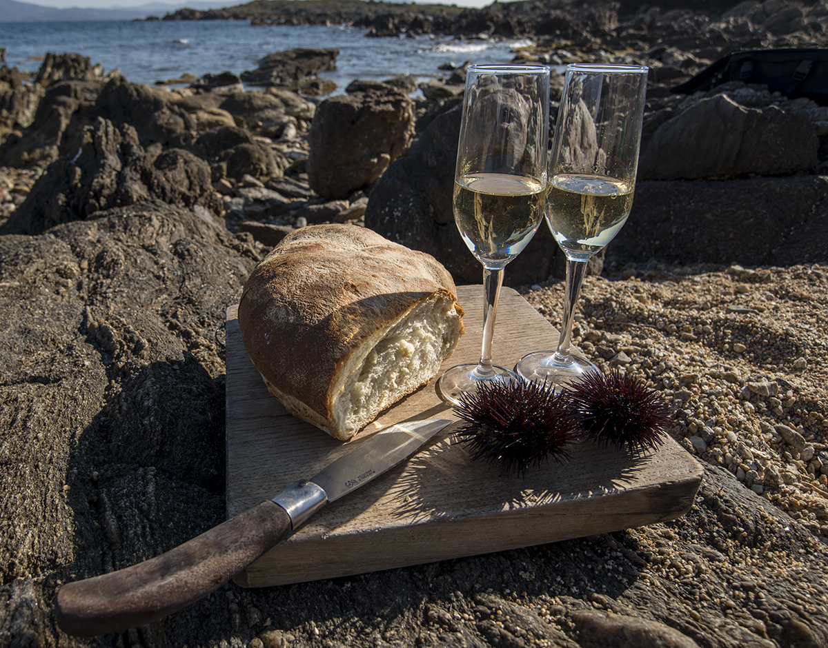 Sea urchins with bread and wine