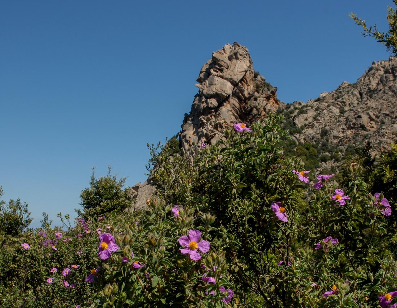 Balba Cana and beautiful Mediterranean vegetation