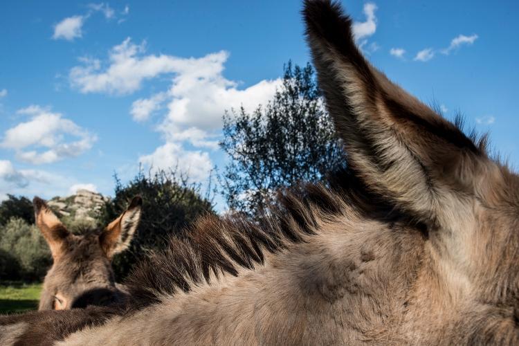 A donkey mane