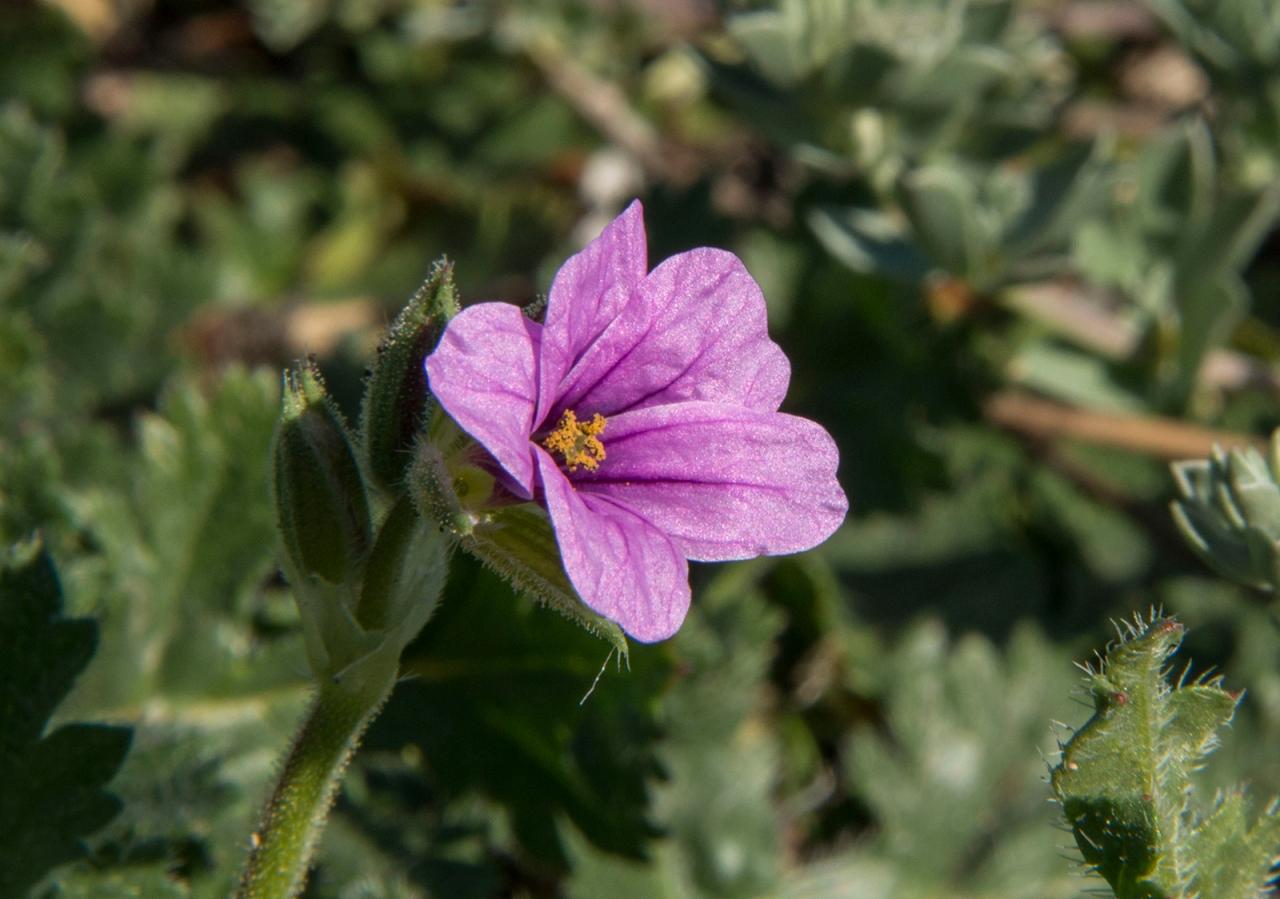 Pink flower with pollen