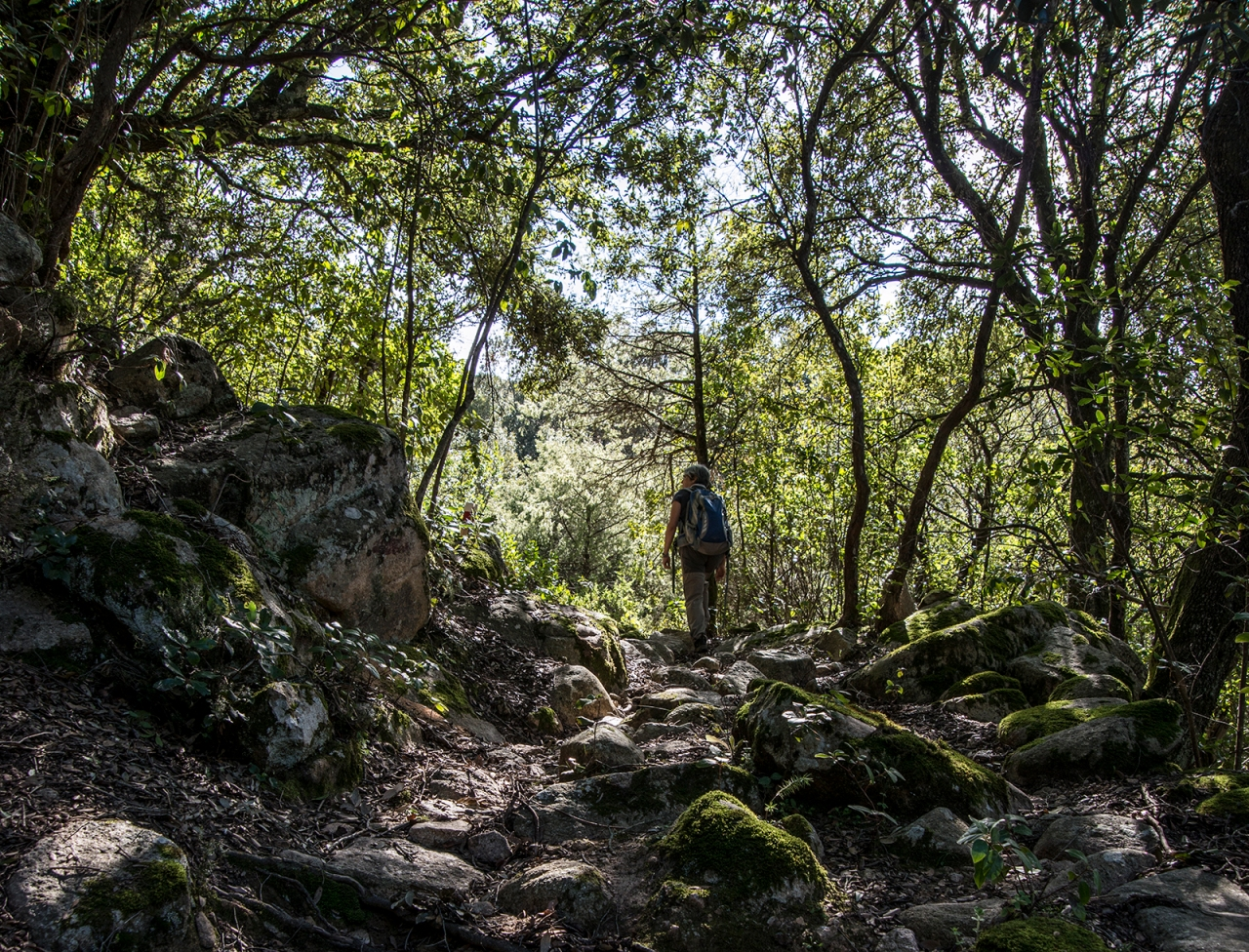 The path crosses a dense wood