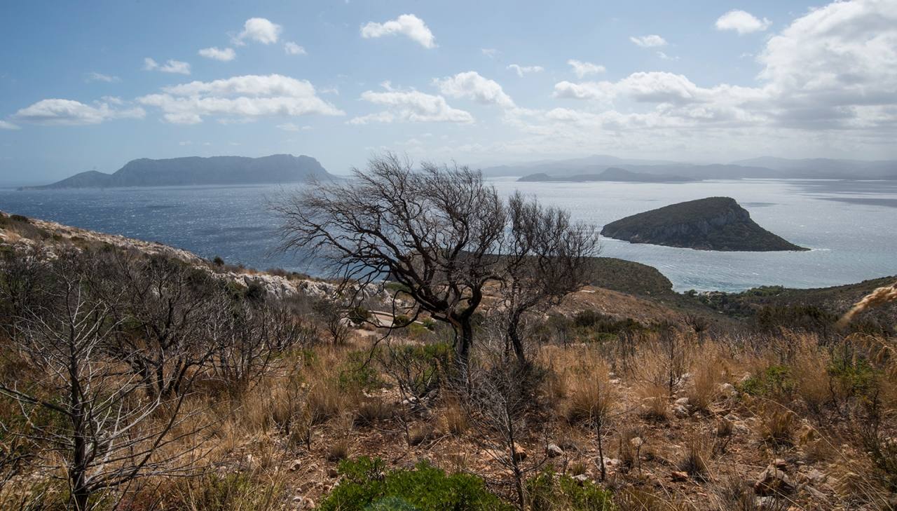 View from Capo Figari with burnt trees