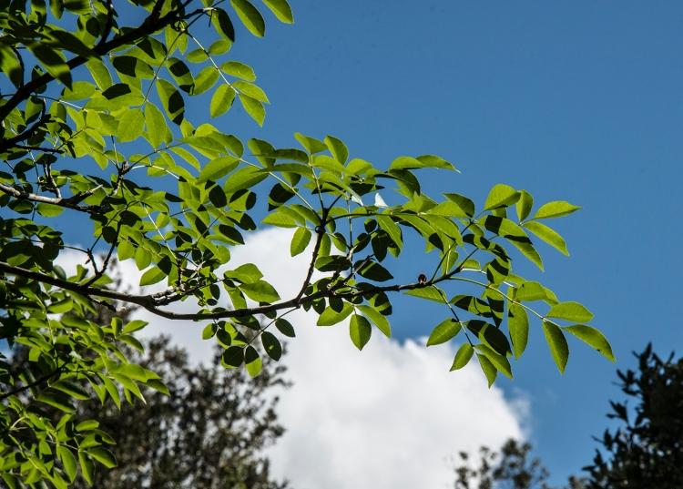Leaves of hash tree