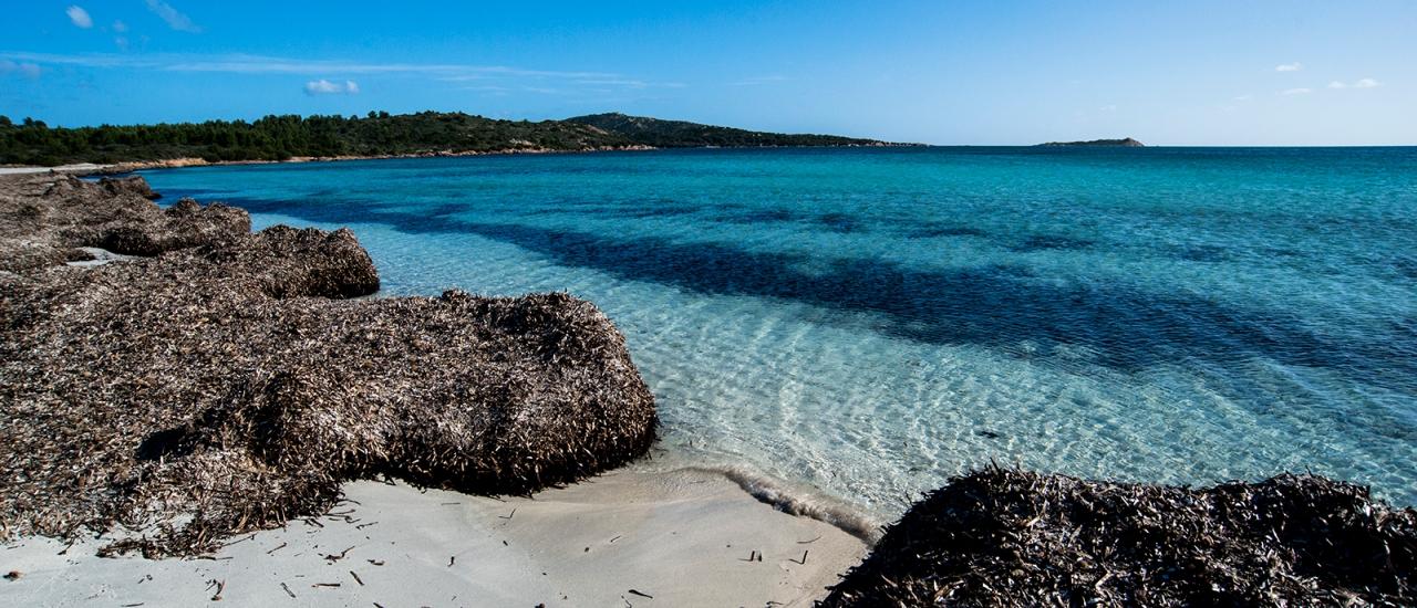 beach with Posidonia leaves